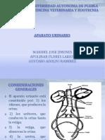Aparato Urinario(propedeutica)