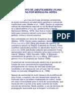 ENRAIZAMENTO_ JABUTICABEIRA.docx