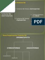 PPt Gymnospermae