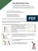 Genetic Code DNA Model