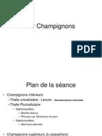 TP Champignons F