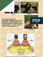 Características Reinos (Biología, UAC 2006)