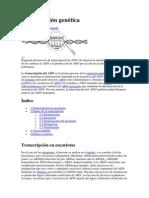 Transcripción genética.docx