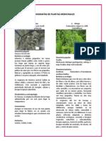 MONOGRAFÍAS DE PLANTAS MEDICINALES. FALTAN 13