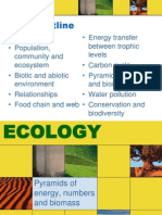 Ecology 4 - Pyramid of Numbers and Biomass