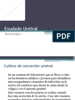 Exudado Uretral