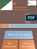 Miologia Membro Inferior