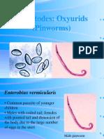 oxyurids