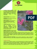 Oleandro.pdf
