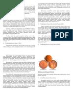 Patofisiologi Retinopati Diabetik