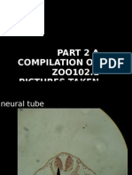 Pictorial Compilation of Tadpole Ontogeny Related Slides