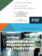 Proyecto Micropropagacion de Cultivo in Vitro de Cafe