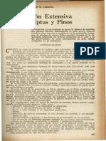 PRODUCCIÓN EXTENSIVA DE EUCALIPTUS Y PINUS