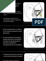 Articulo Dino y Tito Anatomia