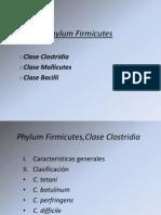 Phylum Firmicutes.ppt