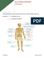 t4 Esquelet i Musculatura