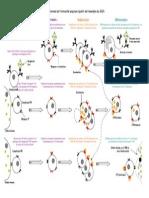 Schema_immunologie