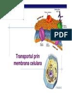 transportul prin menbrana celulei