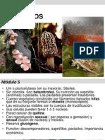 Módulo 5- Botánica 2013