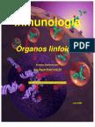 Organos linfoides