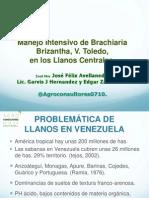 Manejo Intensivo de Brachiaria Brizantha,Variedad Toledo,En Los Llanos Centrales