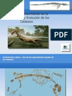 Paleontologia_Evolucion_cetaceos2009