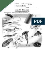 2ª Unidade- Organismos Unicelulares 6ª Série