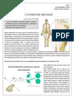 FORMACIÓN DE CONEXIONES AXONALES