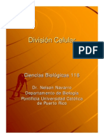 CLASE 04-Division Celular
