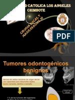 Tumores Benignos Odontogenicos Eu