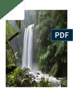 NaturePics_1.pdf