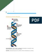 Glossário de Genética Molecular