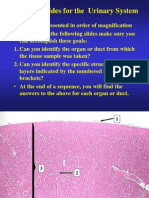 Urinary Histology Slides