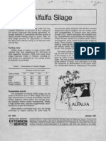 Alfalfa Silage1