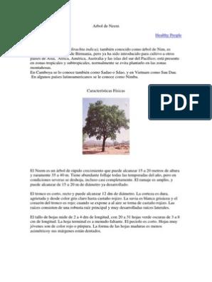 medicina ayurvédica para la diabetes en el árbol de chennai