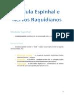 Medula Espinhal e Nervos Raquidianos