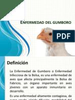 Gumboro