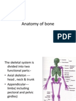 Anatomy of Bone
