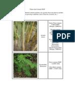 Plants That Contain DMT