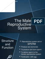 male system