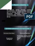 placenta-1211124196373428-9(1)
