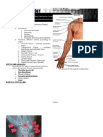 Muscle and Fascia Compartments Trans