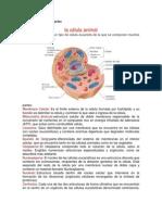 célula animal y sus partes.docx