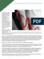 Pikaramagazine.com-Deseo Por Defecto