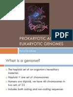 Prokaryotic and Eukaryotic Genomes