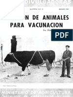 Sujecion de Animales Para Vacunacion.