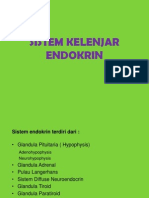 endokrin-101104-