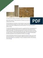 Ammu - To Print Migratory Birds