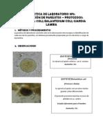 Resumen Lab de Parasitologia