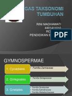Famili Anggota Gymnospermae
